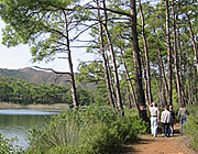 walking the pine forest of Gokova Gulf